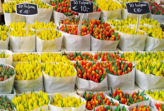 рынок тюльпанов