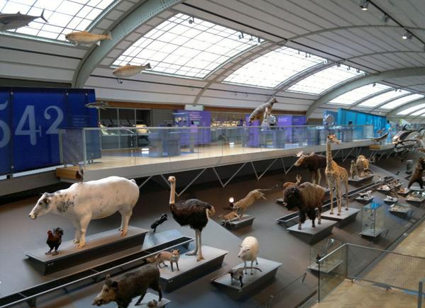музей естествознания Брюсселя
